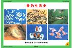 生物的生殖、發育和遺傳
