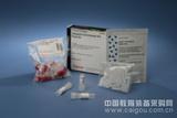 GenFectinTM基因转染试剂