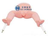 婴儿骨内灌注模型,小儿骨穿模型