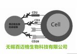 分选CD45抗体磁珠