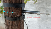 树木生长测量仪树木生长变化传感器
