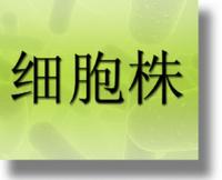 人子宫鳞癌细胞(高分化)