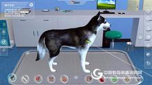 國泰安犬VR虛擬解剖實訓系統(動物解剖VR實訓系統學習軟件)