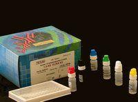 大鼠血管性血友病因子试剂盒