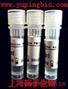 缓激肽B2受体抗体