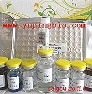 胆囊收缩素/肠促胰酶肽(CCK)ELISA试剂盒