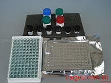 人高分子量细胞角蛋白(CK-HMW)ELISA试剂盒