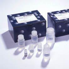 人垂草扁桃酸(VMA)ELISA试剂盒