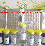 人可溶性CD146(sCD146)ELISA试剂盒