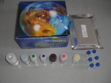 兔子免疫球蛋白G(IgG)ELISA试剂盒说明书