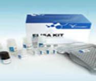 人白介素6(IL-6)ELISA KIT