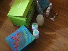 人强啡肽(Dyn)ELISA试剂盒
