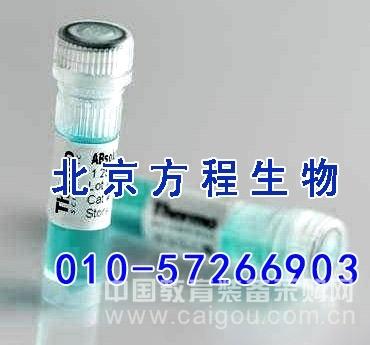 大鼠游离β绒毛膜促性腺激素(f-βCG)ELISA法