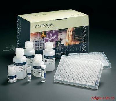 人整合素连接激酶1 ELISA试剂盒