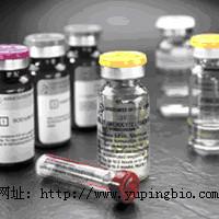 猫睾酮(T)ELISA试剂盒