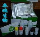 人抗纺锤体抗体(MSA)Elisa试剂盒