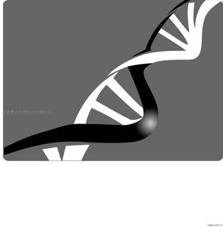 碧波TUNEL细胞凋亡原位检测试剂盒(荧光法)(石蜡切片)