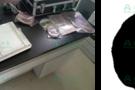 河南人民胜利渠管理局植物生理监测系统简介