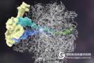 Science挑战教科书,发现蛋白质新作用