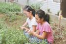 宁波小学推中草药校本课 大受学生欢迎