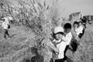 河南正式认定38个中小学社会实践教育基地