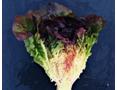 高光谱成像与叶绿素荧光成像技术在生菜和玉米无损检测中的应用