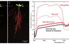 高光谱成像技术在根系表型分析中的应用
