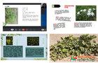 邯郸学院生命科学与工程学院举办《我家乡的资源植物》线上活动