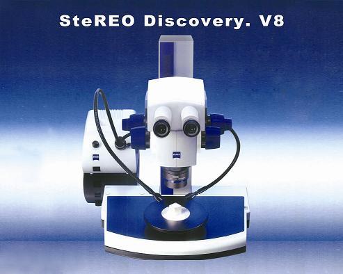 研究级体式显微镜SteREO Discovery.V8