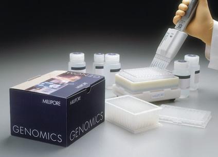 大鼠促卵泡素(FSH)ELISA试剂盒