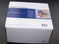 人绒毛促性腺激素β(β-HCG)ELISA试剂盒
