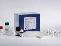 大鼠6酮前列腺素(6-K-PG)ELISA试剂盒