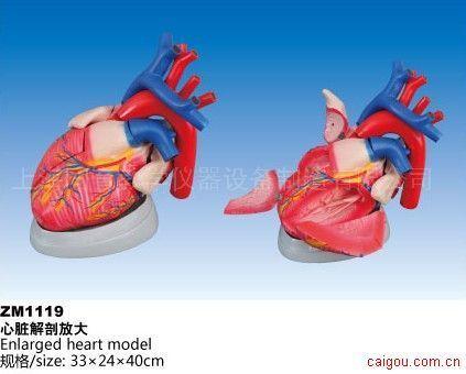 心脏解剖放大