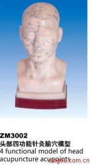 头部四功能针灸腧穴模型