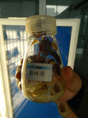 异军突起的科学松鼠会——郑州四中