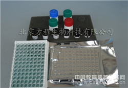小鼠E选择素(E-Selectin/CD62E)elisa kit试剂盒代测